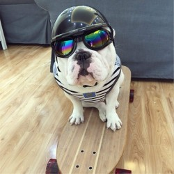 ABS Plastic Motorcycle Helmet Accessories for Dog (Color May Vary)
